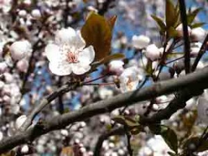 Spring Flowers On Tree